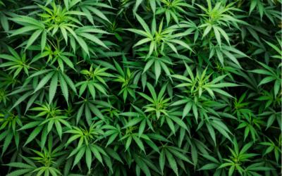 Legalized Marijuana in NY FAQs